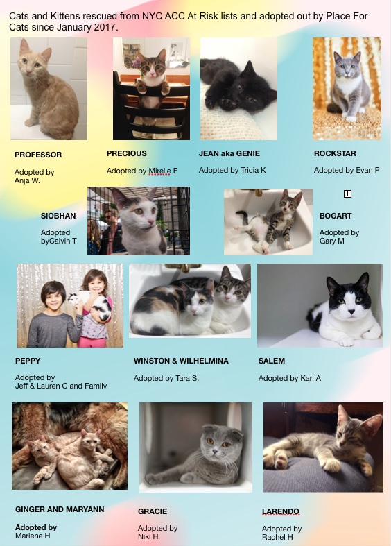 Place For Cats Adoptions