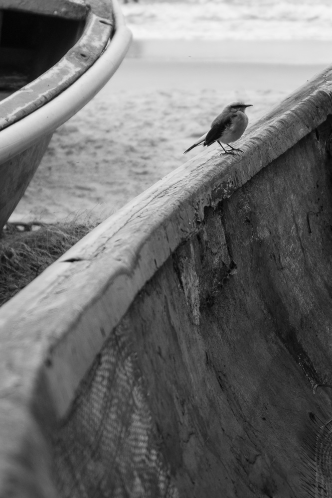 Bird in the fishing boat in Copacabana Beach
