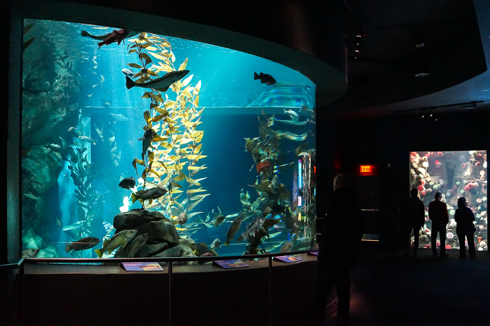 Fish tank at the Ripley's Aquarium of Canada