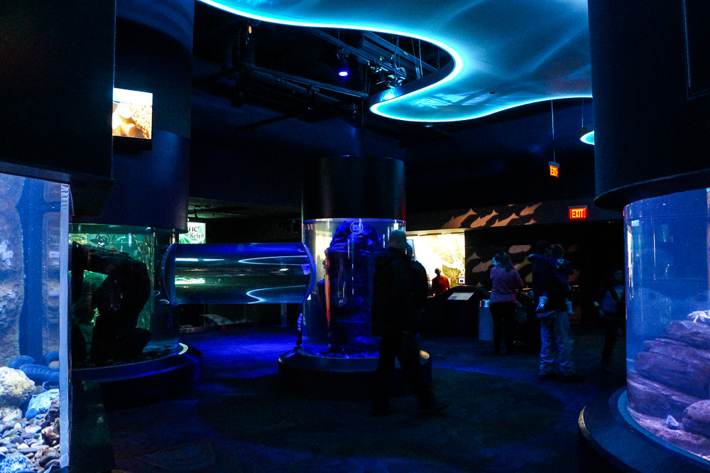 Canadian Waters Gallery at Ripley's Aquarium of Canada