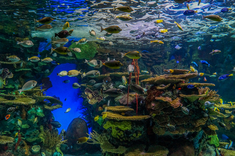 Rainbow Reef at the Ripley's Aquarium of Canada