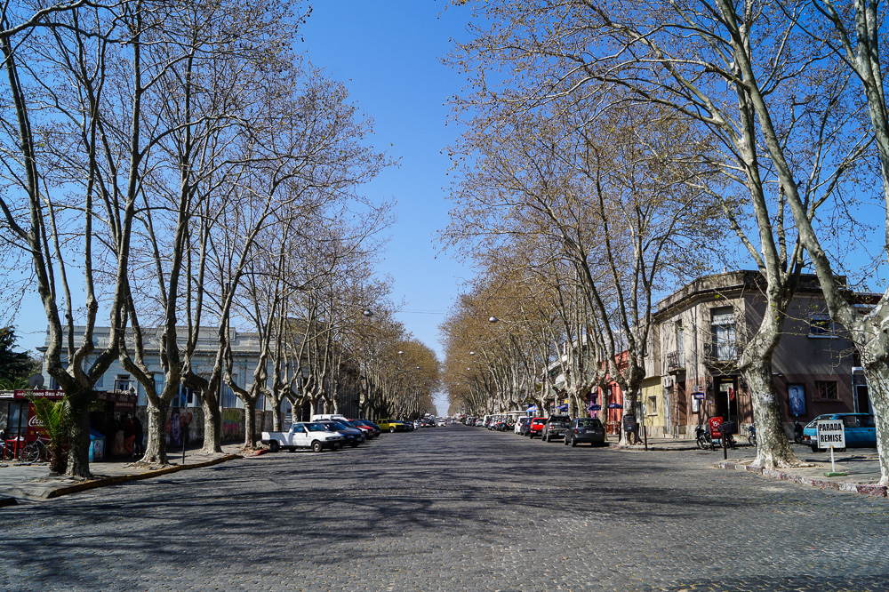 Trees at General Flores street in Colonia Del Sacramento