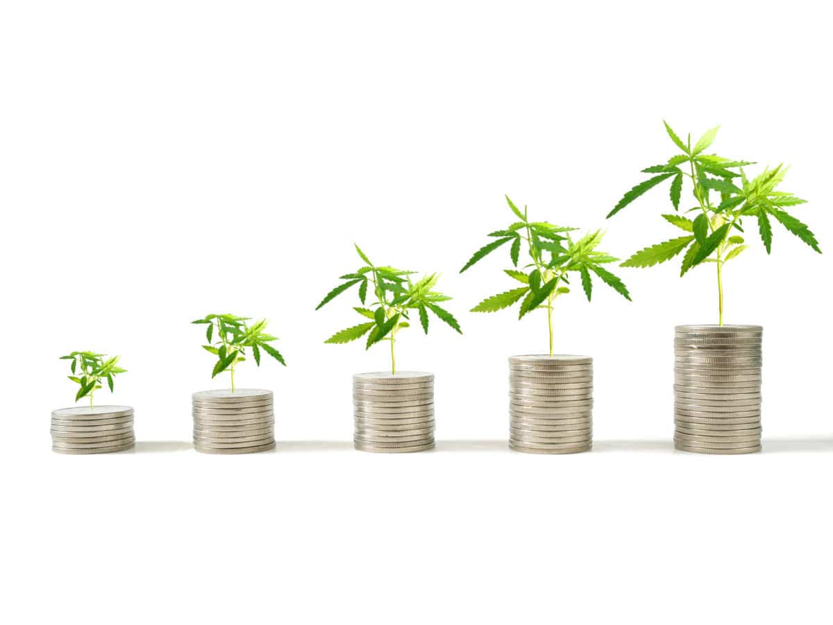Marijuana plants growing on stacks of coins isolated on white background. Marijuana growing business concept.