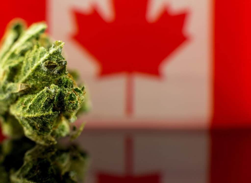 cannabis regulations