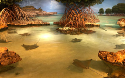 New England Aquarium – Shaping Perceptions About Our Blue Planet