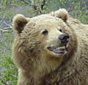 A Smiling Bear avatar
