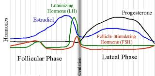 P.O.T.S & Periods: Postural Orthostatic Tachycardia Patient's Menstrual Cycles