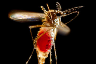 CDC Reports: First Chikungunya case acquired in the United States reported in Florida