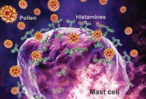 princ_rm_photo_of_mast_cell