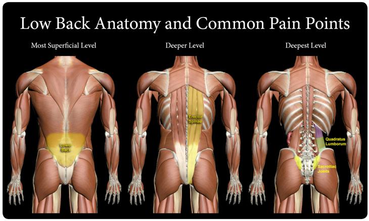 low back pain, QL stretch, Ql stretching, stretches for QL