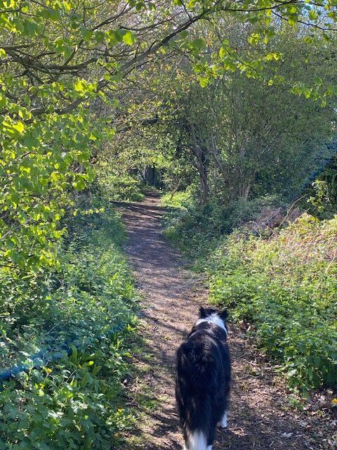 Sammy on a forest path