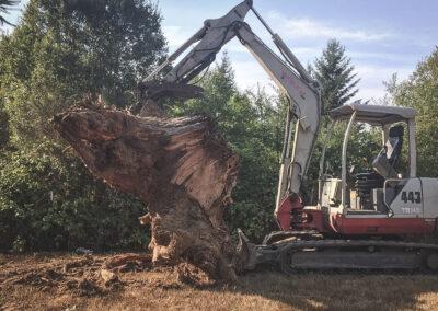 Stump Removal-2