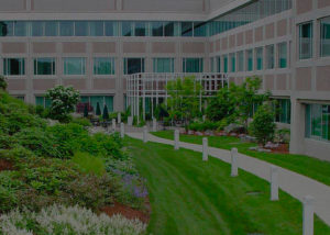 Best Commercial Landscapers