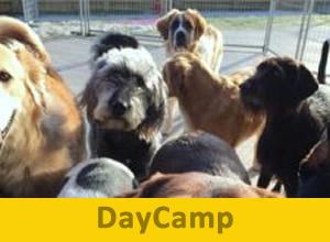 DayCamp-300x220