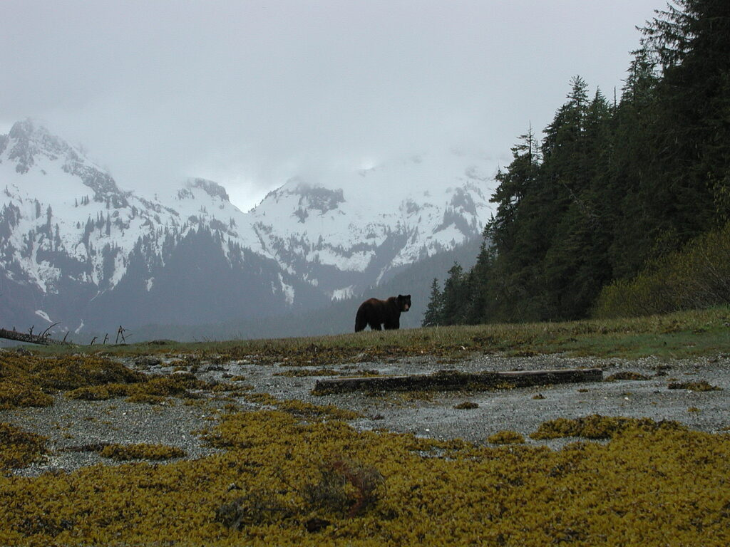 Grizzly watching on Admiralty Island, Alaska