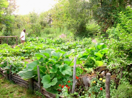 Grow Your Own Food – Or Else