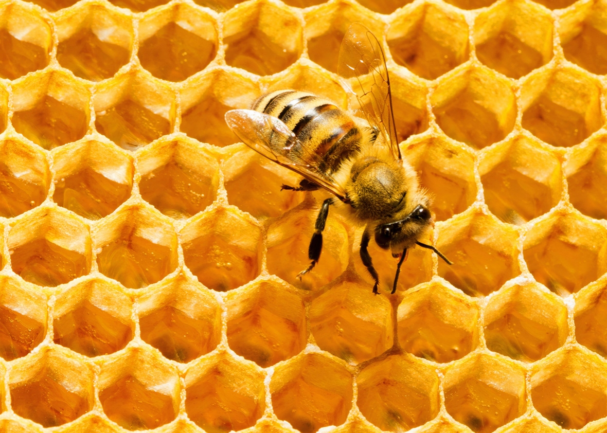Thumbnail for the post titled: DIY: Render Beeswax from Honeycomb