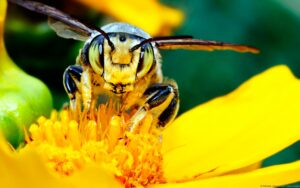 bee_pollinating