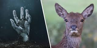 Thumbnail for the post titled: Zombie Deer Disease: Yeah, It's Real