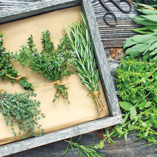 A Guy's Guide to Herbal Health