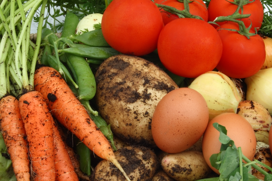 Thumbnail for the post titled: The Health Benefits of Growing Your Own Food