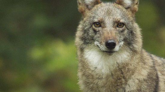 Nature's Predators on Your Homestead