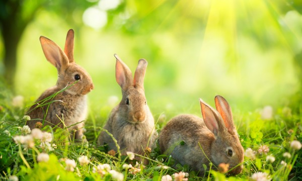 Defend Your Garden From Rabbits