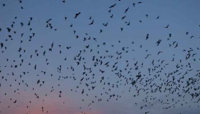How to Attract Bats for Natural Pest Control