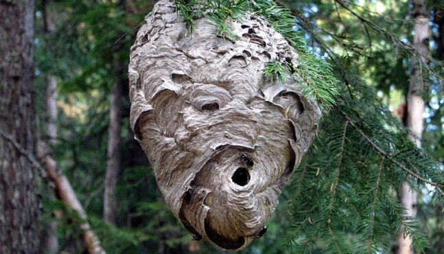 Survive Deadly Stinging Wasps