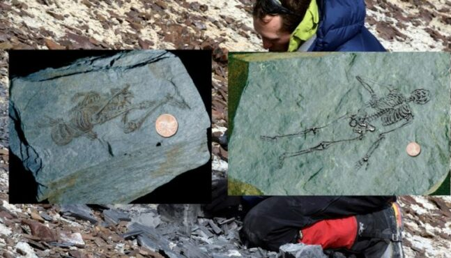 Tiny Human Skeleton Fossils In Antarctica