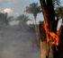Liberals Blame Climate Change for Australia's Wildfires Despite 24 Arson Arrests