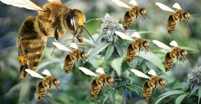 """Thumbnail for the post titled: """"High"""" Bees Could Save the World"""
