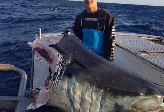 Giant Unknown Sea Creature Bites Off Head of Huge Shark!