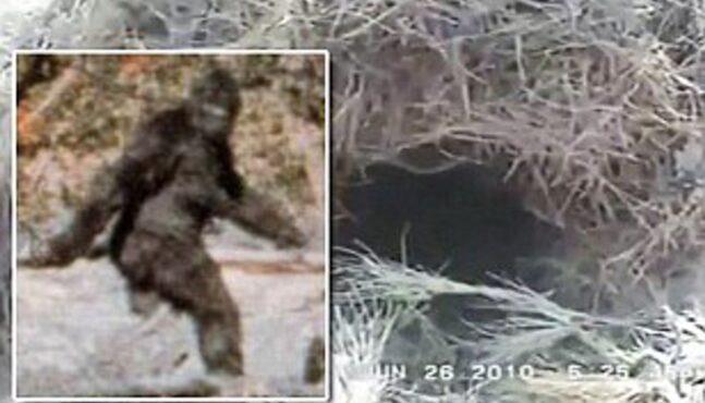 Oil Worker Captures Video of Bigfoot!