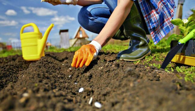 5 Best Foods for a Survivalist's Home Garden
