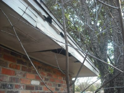 Squirrels in Soffits Montgomery, AL
