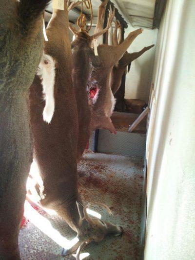 Deer Processor Montgomery, AL