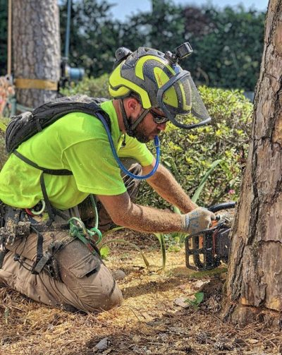 Tree Removal Montgomery, AL