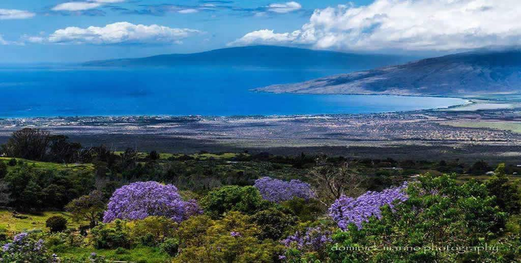 Upcountry Maui vista