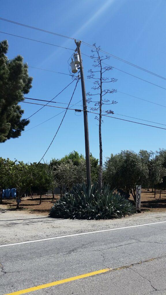 Morgan Hill, CA {CF} (34) 20170716_152327