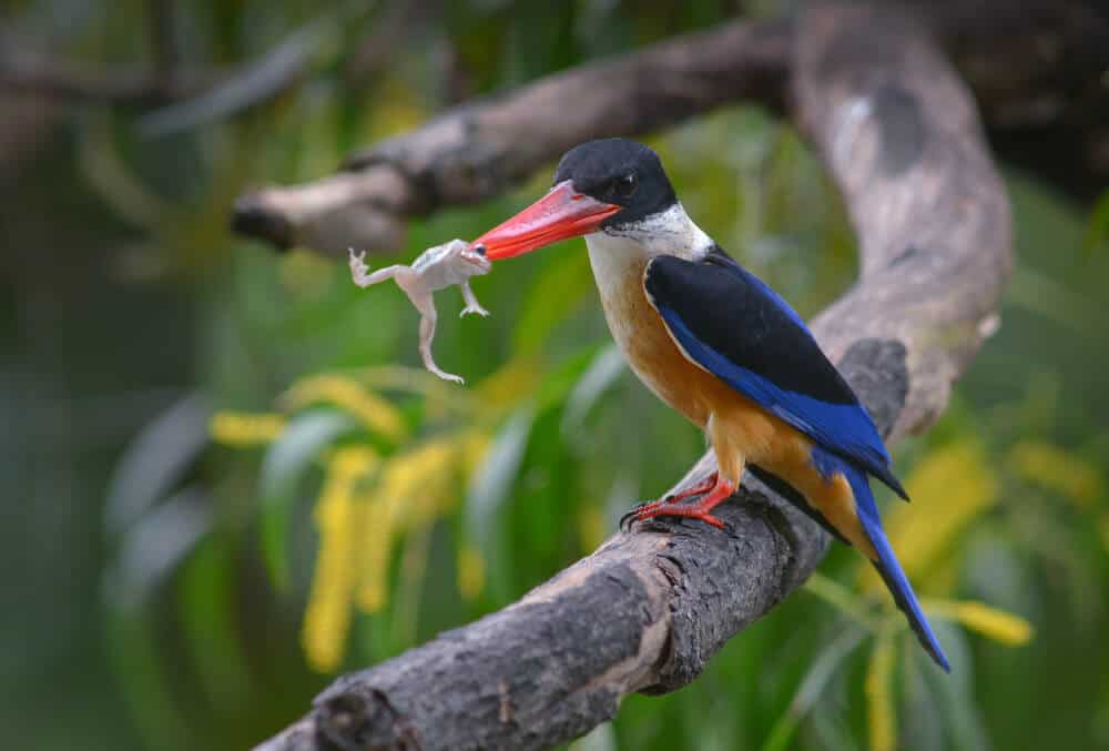 Colorful bird eating a frog, to illustrate the article's concept of getting the worst task out of the way first
