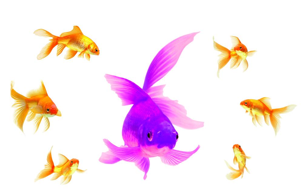 shutterstock_50716648 purple CMYK