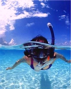 Snorkel with the Fishes