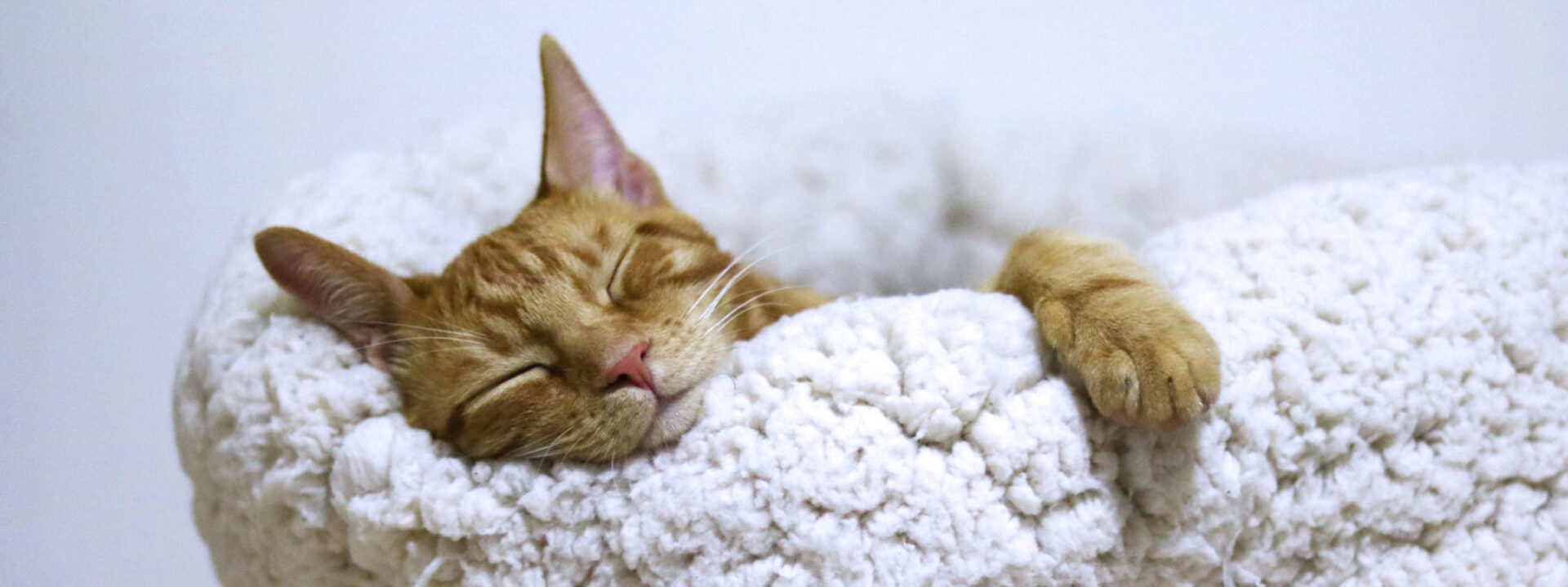cat_restful sleep_Gift page