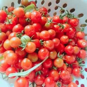 Cà chua bi/ Cherry Tomato