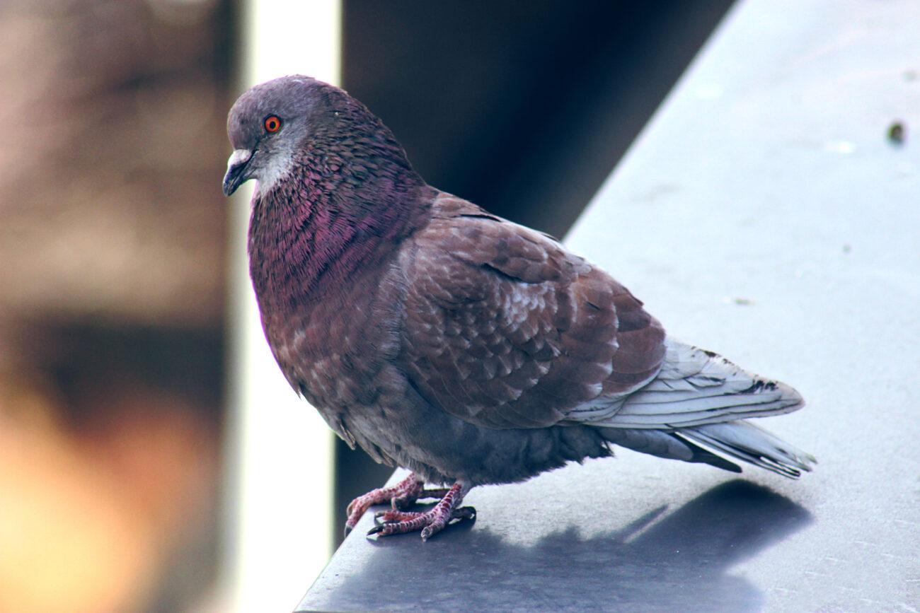 BirdEdit