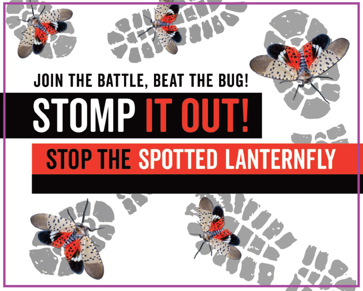Spotted Lanternfly Information for Residents