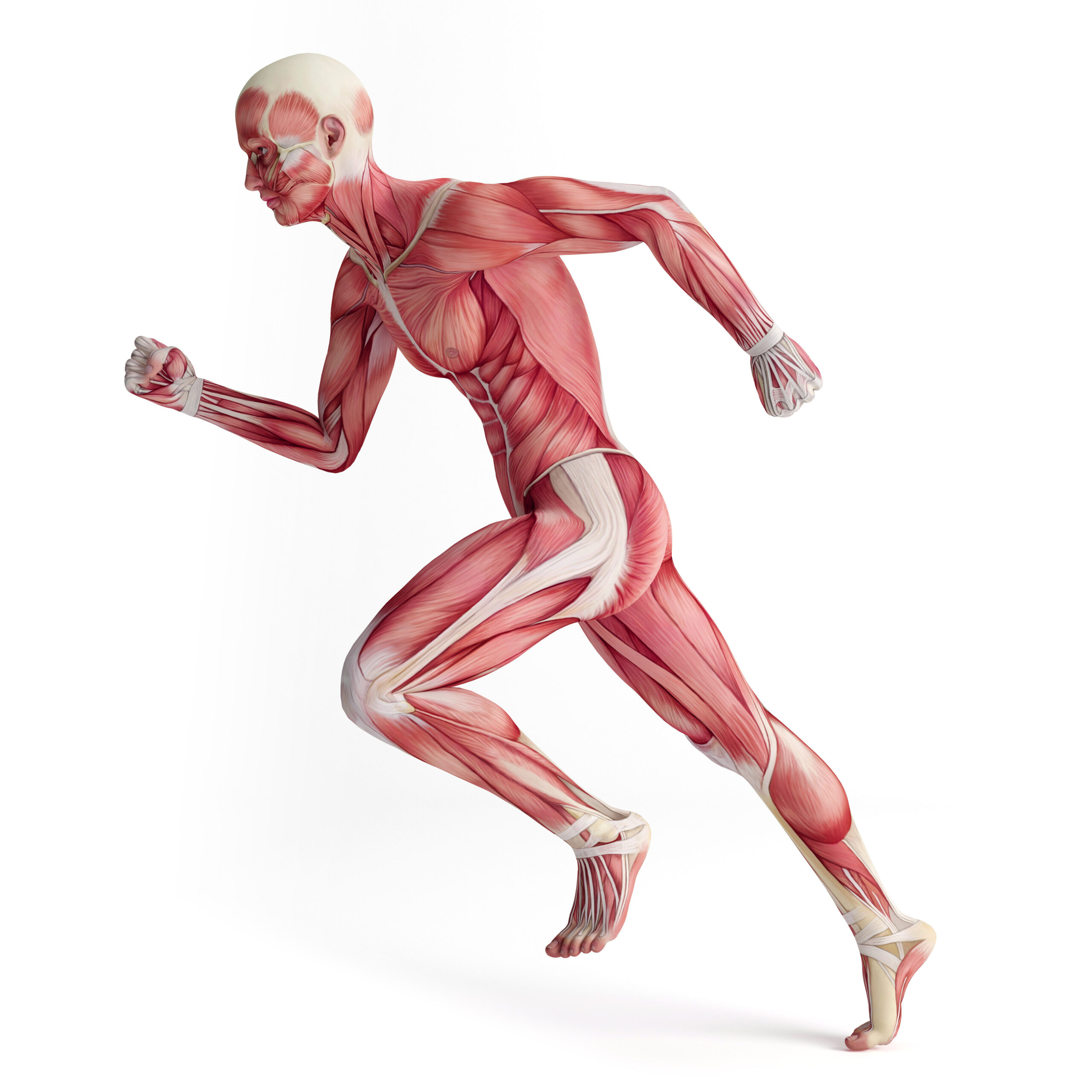 Energy Systems Used in Endurance Athletics