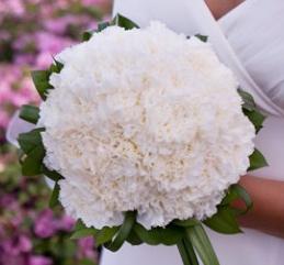 white-carnation-winter-wedding-bouquet