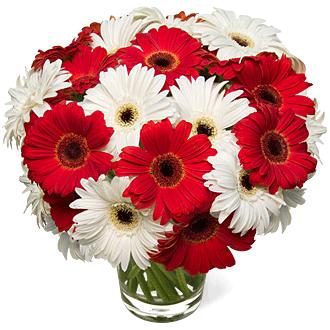 white-red-gerbera-daisies-wedding